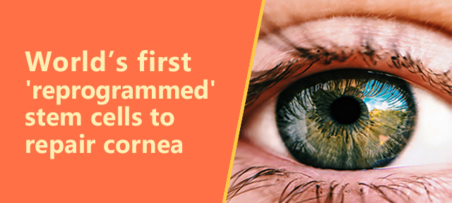 World's first 'reprogrammed' stem cells to repair cornea